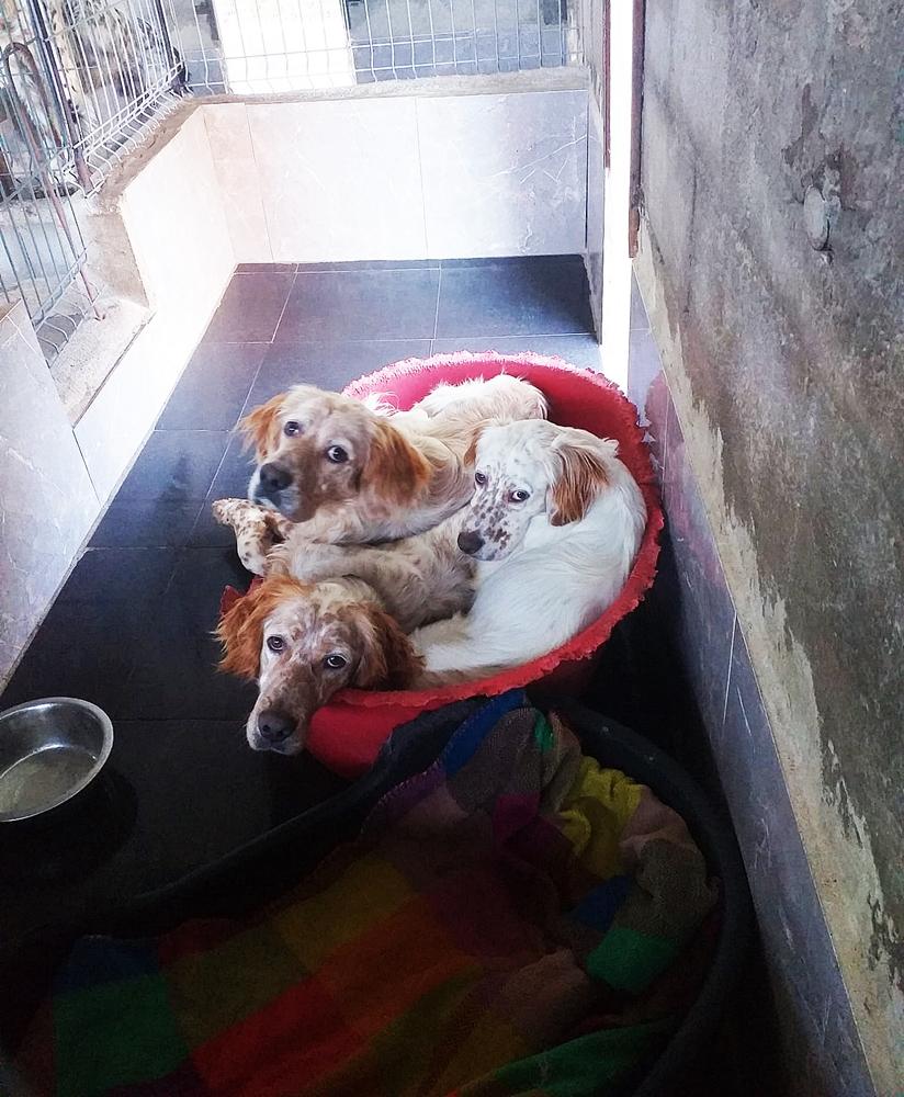 ¿Dónde viven nuestros perros hasta su adopción?