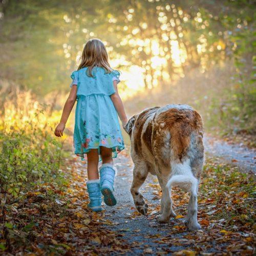 Pasos para adoptar un perro