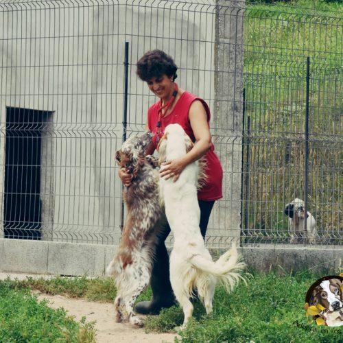 ¿Qué perro debo adoptar? Déjate asesorar.
