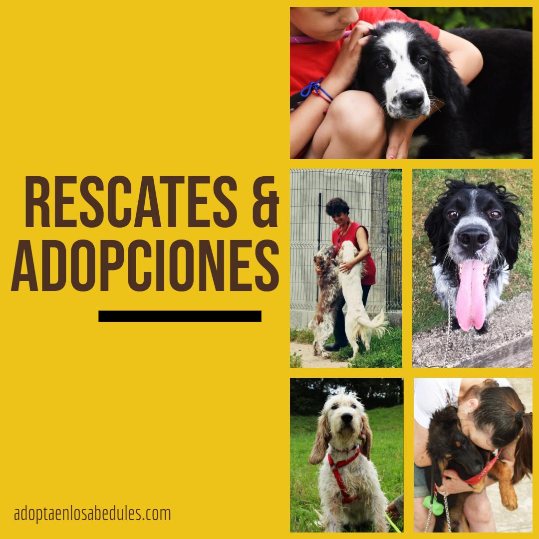 Listado Rescates & Adopciones 2019 [ACTUALIZADA]