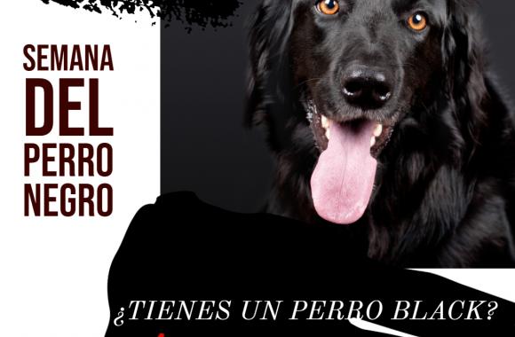 La Semana del Perro Negro. ¡BLACK FRIDAY!